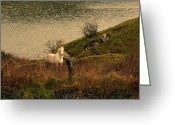 Minard Greeting Cards - White horse Greeting Card by Barbara Walsh