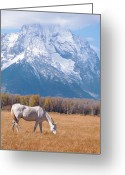 Snowcapped Greeting Cards - White Horse In Teton National Park Wy Usa Greeting Card by Chasing Light Photography Thomas Vela