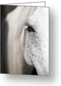 Animal Portrait Greeting Cards - White Horse Portrait Greeting Card by Emmanuel Breton