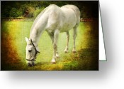 White White Horse Digital Art Greeting Cards - White Horse Greeting Card by Svetlana Sewell