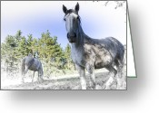 Caballo Greeting Cards - White horses and blue sky 2 Greeting Card by Fernando Alvarez