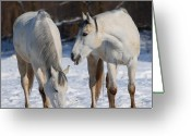 Dressage Photo Greeting Cards - White Horses Greeting Card by  Jaroslaw Grudzinski