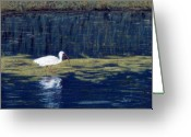 Lakes Pastels Greeting Cards - White Ibis Greeting Card by Jan Amiss