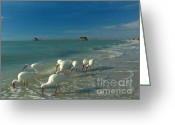 South Beach Greeting Cards - White Ibis near Historic Naples Pier Greeting Card by Juergen Roth