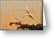 Cypress Digital Art Greeting Cards - White Lake Swamp Sunrise - Egret Greeting Card by J Larry Walker