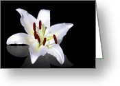 Oriental Flower Greeting Cards - White lily Greeting Card by Jane Rix