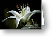Easter Greeting Cards - White Lily Greeting Card by Julie Palencia