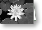 Black And White Floral Greeting Cards - White Lotus 2 Greeting Card by Ellen Henneke