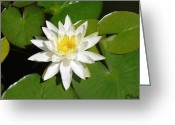 Lotus Leaves Greeting Cards - White Lotus Greeting Card by Ellen Henneke