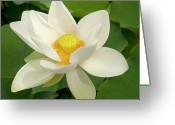 Lotus Leaves Greeting Cards - White Lotus Greeting Card by Elvira Butler