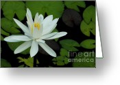 Lotus Leaves Greeting Cards - White Lotus flower Greeting Card by Sami Sarkis