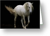 Background Greeting Cards - White Lusitano Horse Walking Greeting Card by Christiana Stawski
