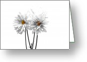 Black White Greeting Cards - White on White Greeting Card by Regina Arnold