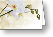 Bud Mixed Media Greeting Cards - White orchid flower Greeting Card by Pics For Merch