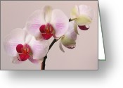 Purple House Greeting Cards - White Orchid  Greeting Card by Juergen Roth