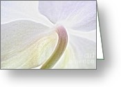 Orchids Greeting Cards - White Orchid Greeting Card by Kristin Kreet