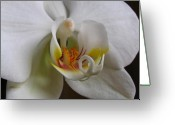 White Orchids Greeting Cards - White Orchid Macro Photograph Greeting Card by Juergen Roth