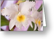 White Flower Greeting Cards - White Orchid Greeting Card by Mike McGlothlen