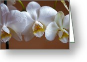 Exotic Flora Greeting Cards - White Orchid  Greeting Card by Svetlana Sewell