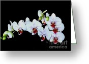 White Orchids Greeting Cards - White Orchids Greeting Card by Marsha Heiken