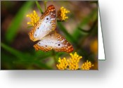 Peacock Greeting Cards - White Peacock Butterfly Greeting Card by Rich Leighton