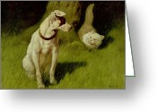 Dog Vs Cat Greeting Cards - White Persian Cat and Jack Russell Greeting Card by Arthur Heyer