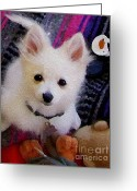 Teacup Digital Art Greeting Cards - White Pomeranian Puppy - Oil Painting Look - Photography - Digital Art Greeting Card by Rebecca Anne Grant