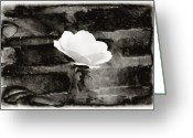 Flower Still Life Prints Greeting Cards - White Rose in black and white Greeting Card by Bill Cannon