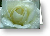 Color Greeting Cards - White Rose Greeting Card by Juergen Roth