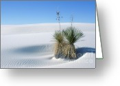 White Sand Greeting Cards - White Sands Dune and Yuccas Greeting Card by Sandra Bronstein