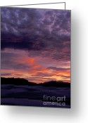 Dramatic Light Greeting Cards - White Sands Sunset Greeting Card by Sandra Bronstein