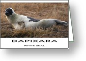 Sea Life Mixed Media Greeting Cards - White Seal  Greeting Card by Dapixara Art