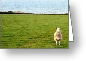 Azure Blue Greeting Cards - White sheep in a green field by the sea Greeting Card by Georgia Fowler