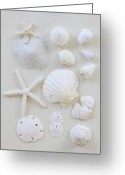 Choice Greeting Cards - White Shells Greeting Card by Daniel Hurst Photography