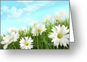 Sunlight Greeting Cards - White summer daisies in tall grass Greeting Card by Sandra Cunningham