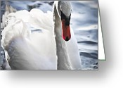 Grace Greeting Cards - White swan Greeting Card by Elena Elisseeva