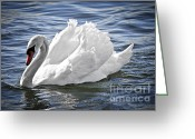 Innocence Greeting Cards - White swan on water Greeting Card by Elena Elisseeva