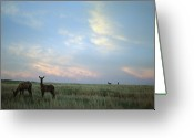 White Tailed Deer Greeting Cards - White-tailed Deer On The Prairie Greeting Card by Joel Sartore