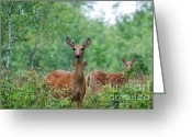 Framed Art Pyrography Greeting Cards - White Tailed Doe Greeting Card by Whispering Feather Gallery