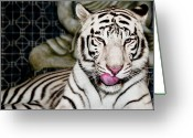 Fur Stripes Greeting Cards - White TIger Greeting Card by Jim DeLillo