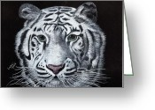 Big Cat Art Prints Greeting Cards - White Tiger Greeting Card by Linda Ginn