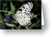 Butterflies And Blue Flowers Greeting Cards - White Tree Nymph #11 Greeting Card by Ramona Johnston