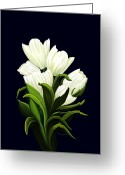 Tulip Art Botanical Art Mixed Media Greeting Cards - White Tulips Greeting Card by Patricia Griffin Brett