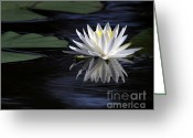 Lilies Flowers Greeting Cards - White Water Lily Greeting Card by Sabrina L Ryan