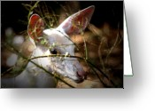 Fawns Greeting Cards - White Whiskers Greeting Card by Emily Stauring