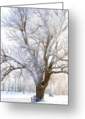 Winter Trees Mixed Media Greeting Cards - White Winter Tree Greeting Card by Svetlana Sewell