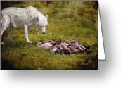 Ym_art Greeting Cards - White wolf and the little duckies  Greeting Card by Yvon -aka- Yanieck  Mariani