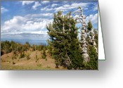 Serene Greeting Cards - Whitebark Pine trees Overlooking Crater Lake - Oregon Greeting Card by Christine Till