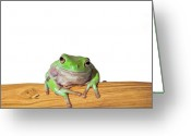 Whites Greeting Cards - Whites Tree Frog Greeting Card by Www.tommaddick.co.uk