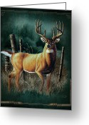 Antlers Greeting Cards - Whitetail Deer Greeting Card by JQ Licensing